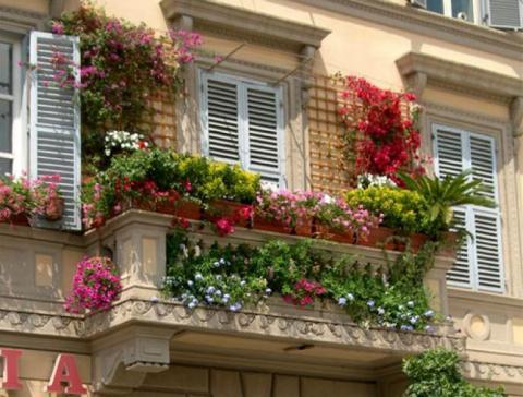 Piante rampicanti da terrazzo: le più amate